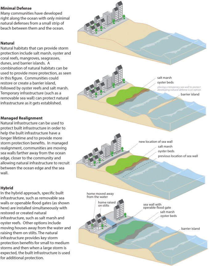 Marshes, Reefs, and Beaches in Coastal Resilience