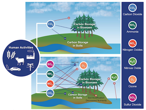 This diagram from the National Climate Assessment shows how altered biogeochemical cycles interact with climate. Click to see a larger version and more details in the NCA.