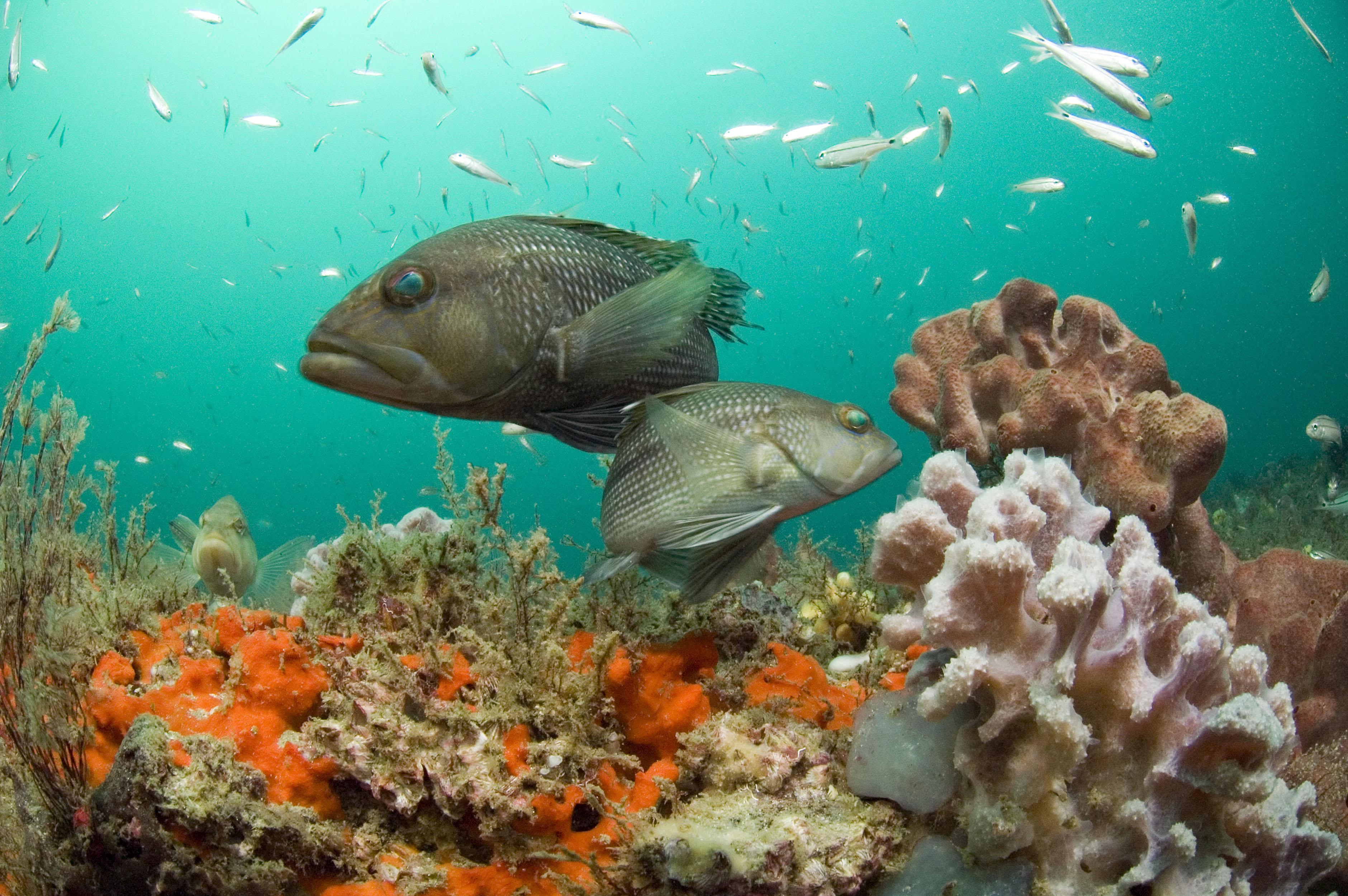 Marine Species Distribution