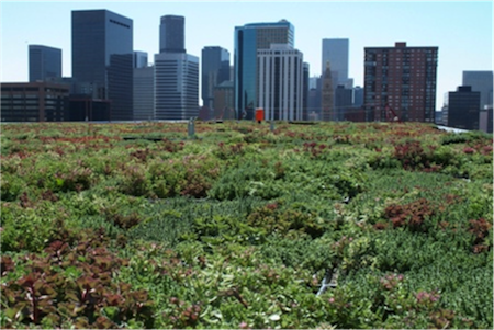 "An example of adaptation: ""green roofs"" help reflect heat and retain rainwater."
