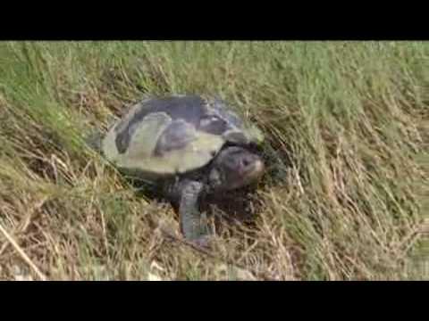 Climate Change - Wildlife & Wildlands