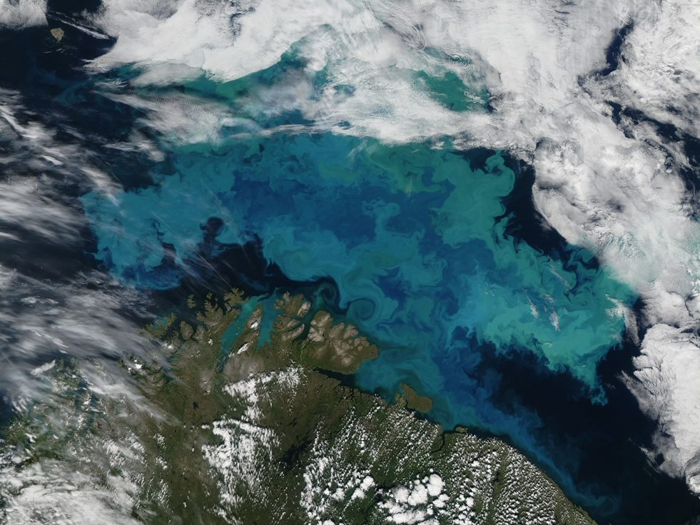 Ocean Chlorophyll Concentration