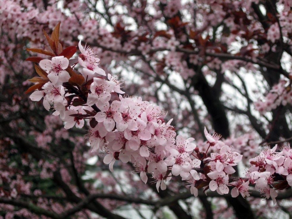 Start of Spring