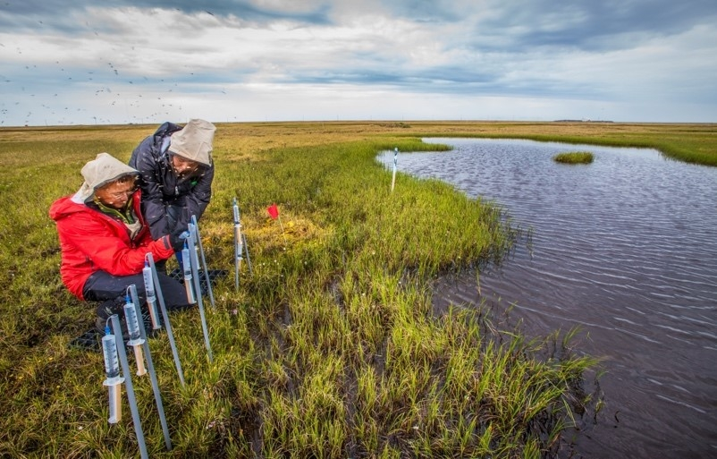 Improving Predictions of Changing Arctic Ecosystems