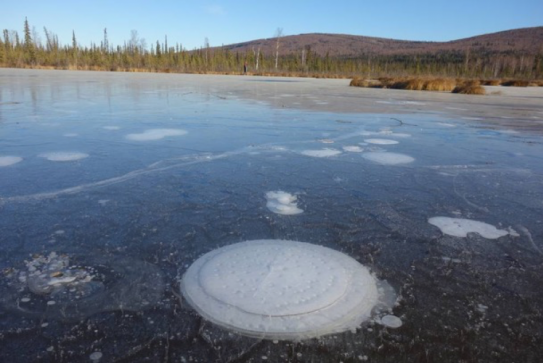 Methane emitted from thawing permafrost below an Arctic thermokarst lake is trapped in bubbles of many different sizes and shapes as the ice grows during the winter.