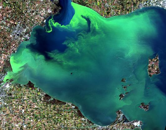 An algal bloom in western Lake Erie