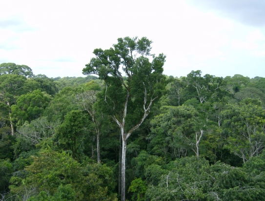 The observational campaign in the Amazon Basin measures key environmental variables, including light and temperature, that drive biogenic emissions of volatile organic compounds from the canopy. (Source: NASA/JPL-Caltech)