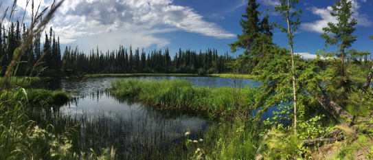 A lake near Fairbanks, Alaska shows signs of thawing permafrost below the surface