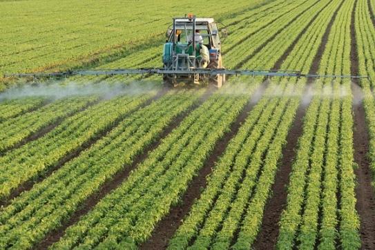 Farmer working a field of crops