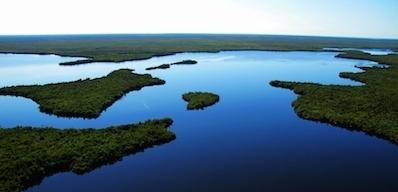 A wetland landscape