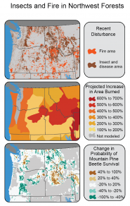 Insects and Fire in Northwest Forests
