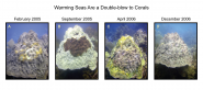 Warming Seas Are a Double-blow to Corals