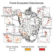 Forest Ecosystem Disturbances