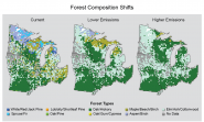 Forest Composition Shifts