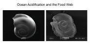 Ocean Acidification and the Food Web