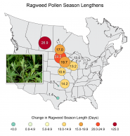 Ragweed Pollen Season Lengthens