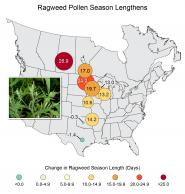 Ragweed Pollen Season Lengthens