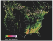 Forest Disturbance Mapped from Space