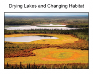 Drying Lakes and Changing Habitat