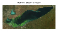 Harmful Bloom of Algae
