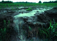Water and Soil