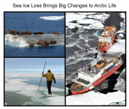 Sea Ice Loss Brings Big Changes to Arctic Life