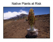 Native Plants at Risk