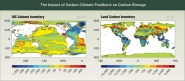 The Impact of Carbon-Climate Feedback on Carbon Storage