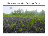 Saltwater Intrusion Destroys Crops