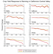 Crop Yield Response to Warming in California's Central Valley
