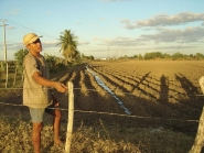 Irrigation of Beans in Brazil