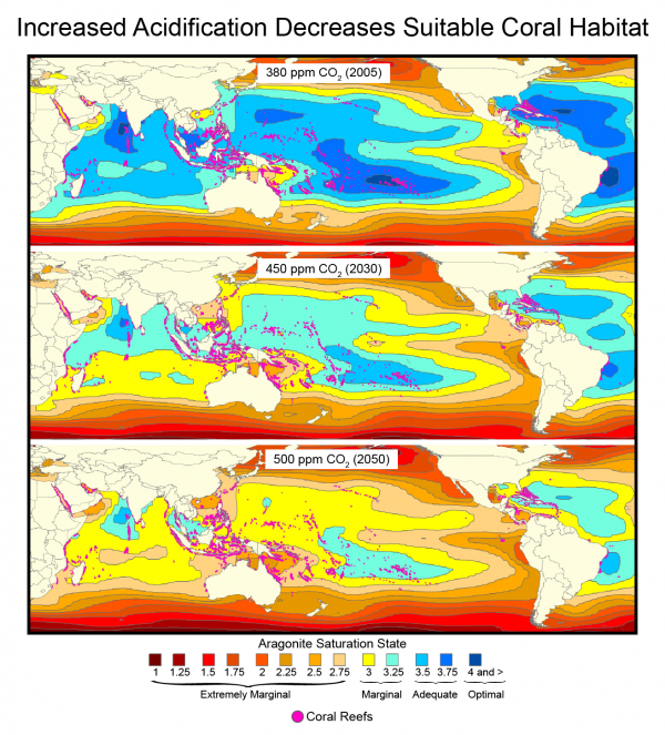 Increased Acidification Decreases Suitable Coral Habitat