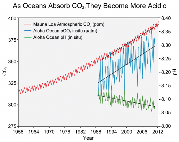 As Oceans Absorb CO2, They Become More Acidic