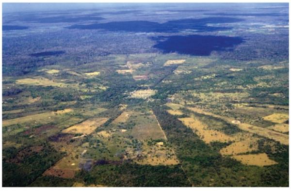Patterns of Deforestation