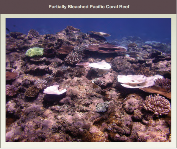 Partially Bleached Pacific Coral Reef
