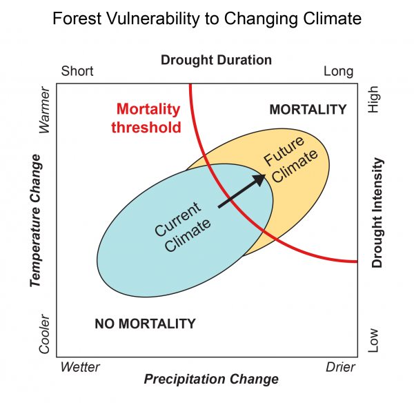 Forest Vulnerability to Changing Climate