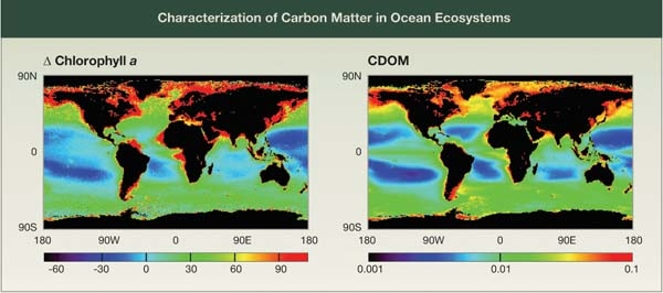 Characterization of Carbon Matter in Ocean Ecosystems