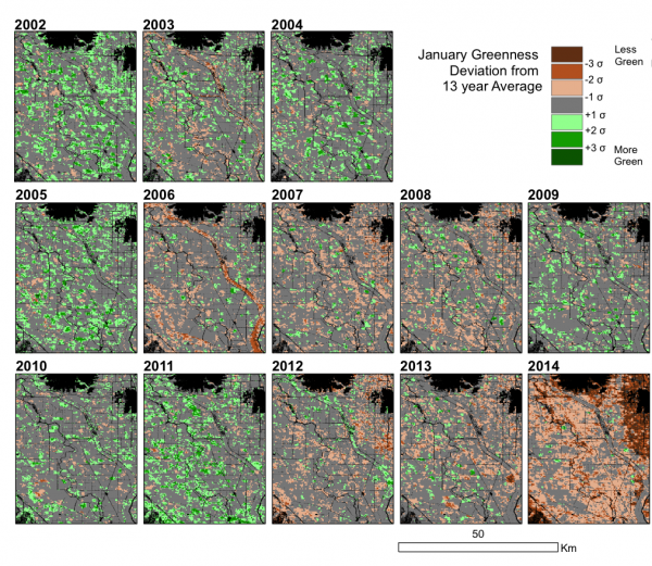 Satellite measurements of cropland greenness
