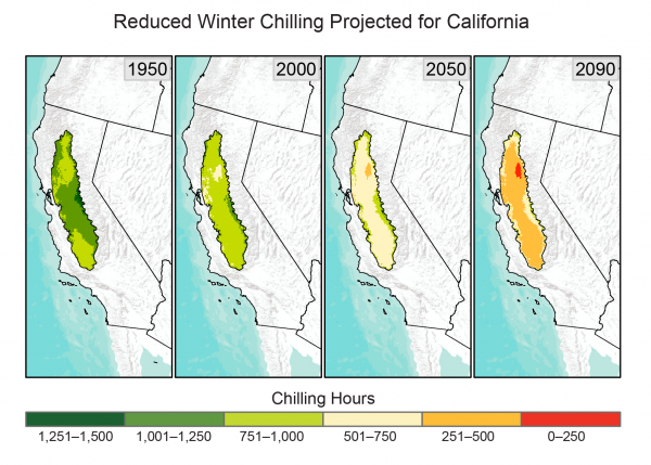 Reduced Winter Chilling Projected for California