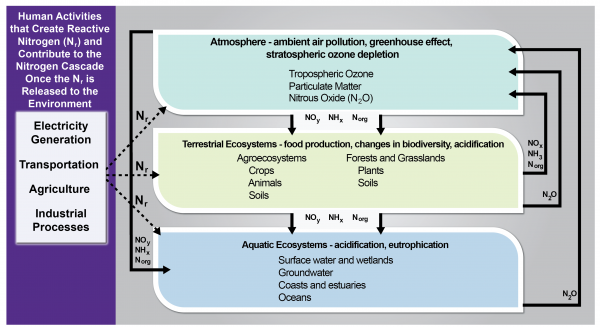 Human Activities that Form Reactive Nitrogen and Resulting Consequences in Environmental Reservoirs