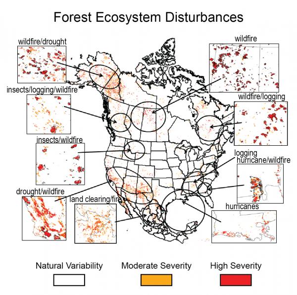 Forest Ecosystem Disturbances