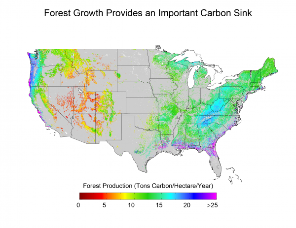 Forest Growth Provides an Important Carbon Sink