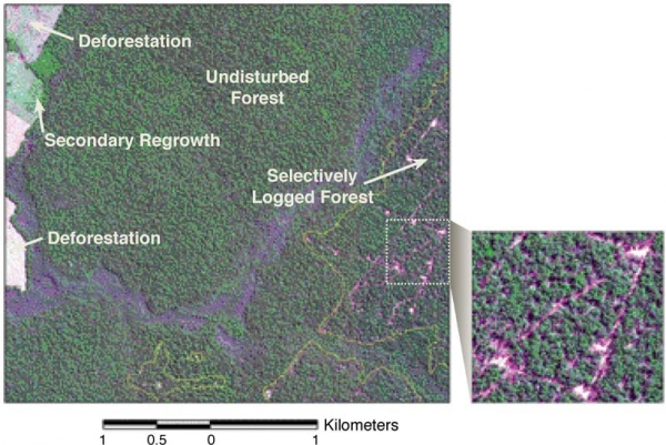 Ikonos Image of Amazon Rainforest