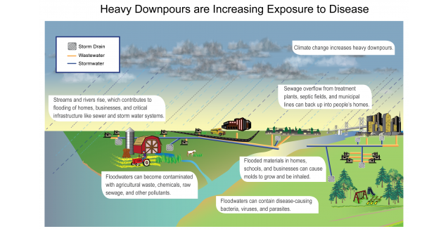 Heavy Downpours are Increasing Exposure to Disease