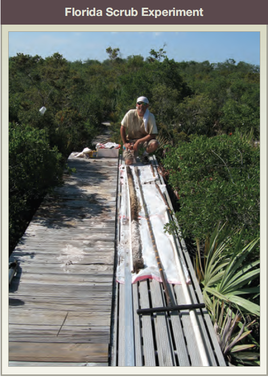 Florida Scrub Experiment