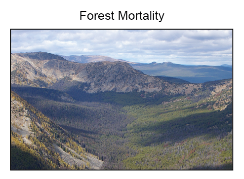Forest mortality