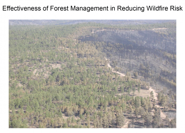 Effectiveness of Forest Management in Reducing Wildfire Risk
