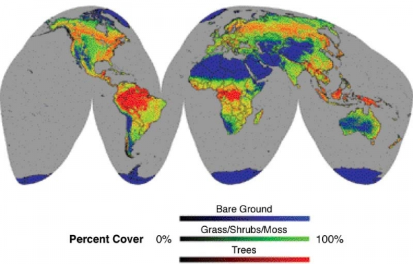 Percent Tree Cover, Herbaceous Cover, and Bare Ground