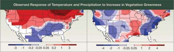 Temperature and Precipitation Response to Vegetation Greenness