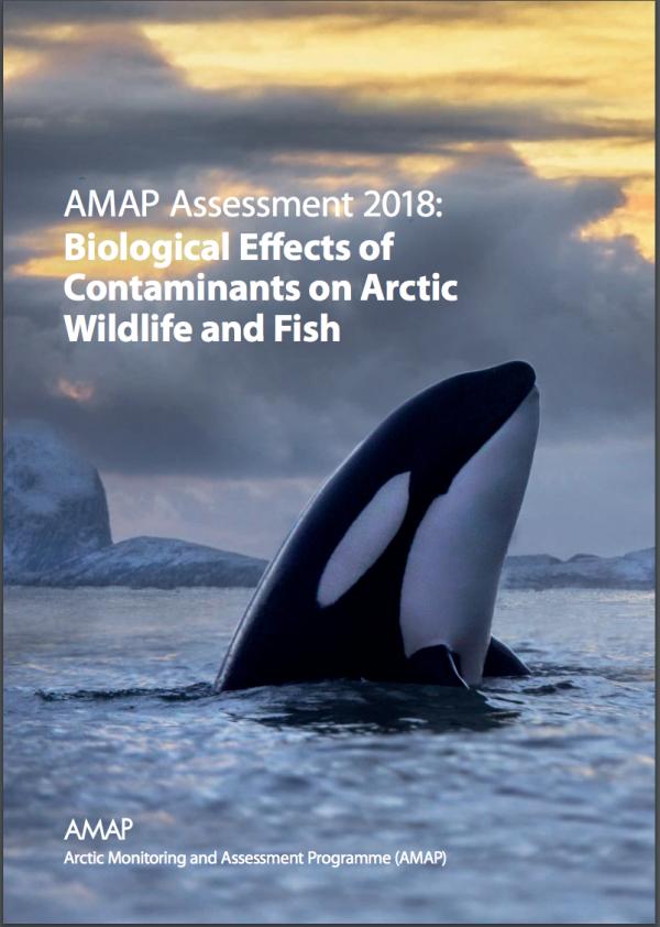 Arctic, Wildlife and Fish
